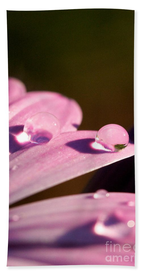 Rain Drop On Petal Bath Sheet featuring the photograph Rain Water On Daisy One by Brooke Roby