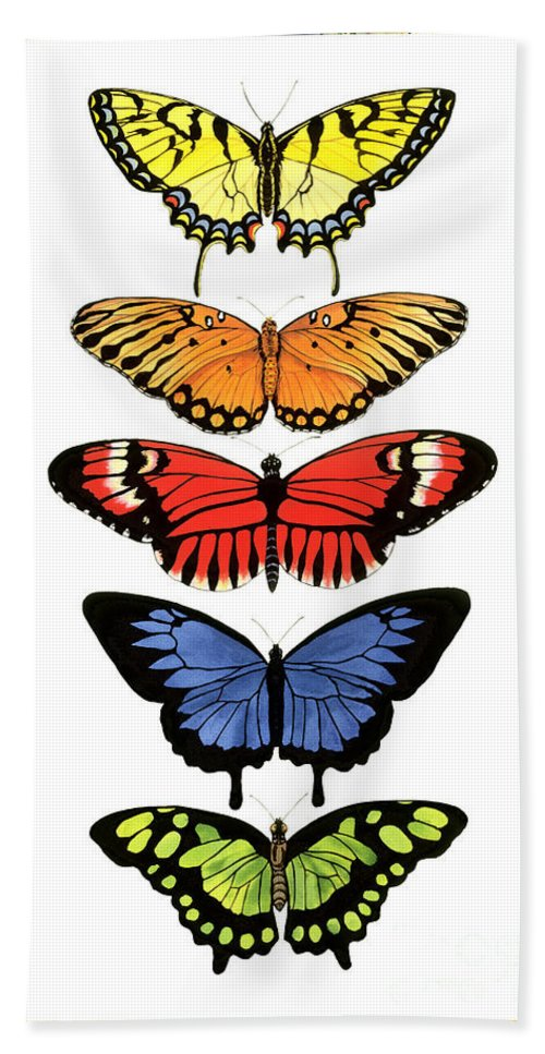 Butterflies Bath Towel featuring the painting Rainbow Butterflies by Lucy Arnold