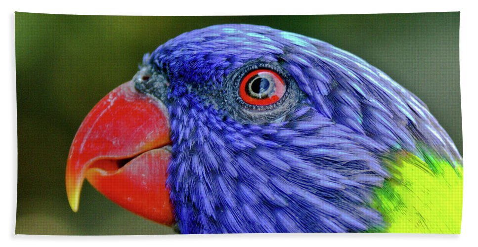 Artistic Photography Hand Towel featuring the photograph Rainbow Lorikeet by Maria Ollman