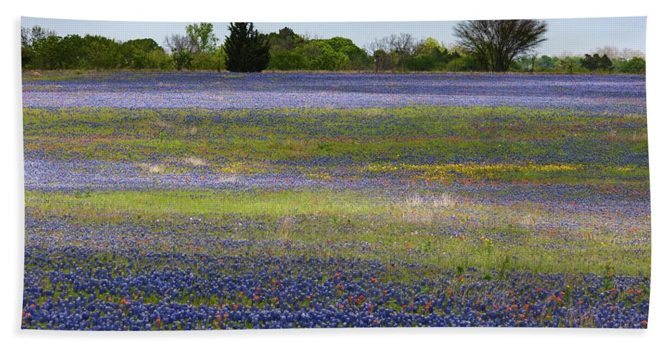 A Pasture Not Far From Houston Is Dazzling In Vivid Swathes Of Bluebonnets Bath Sheet featuring the photograph Rainbow On The Ground by Gerard Harrison