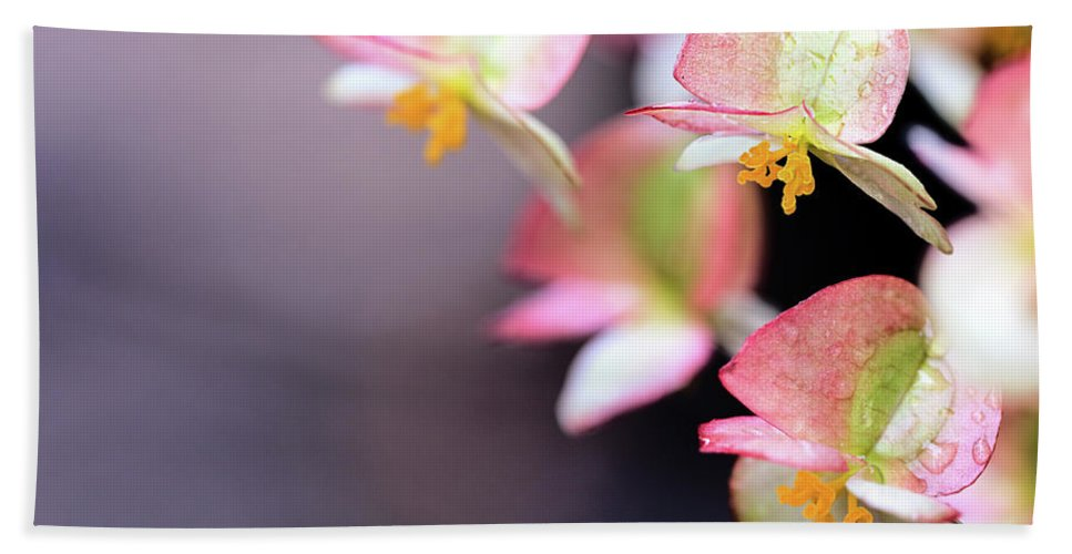 Flower Bath Sheet featuring the photograph Raindrops On Rare Begoinia Blooms In Macro by Sharon Minish