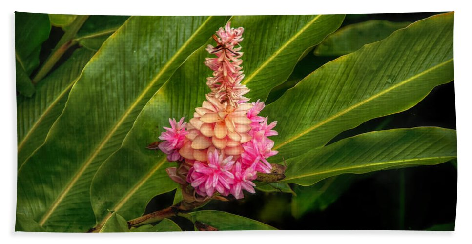 Flowers Hand Towel featuring the photograph Rainforest Beauty by Hanny Heim