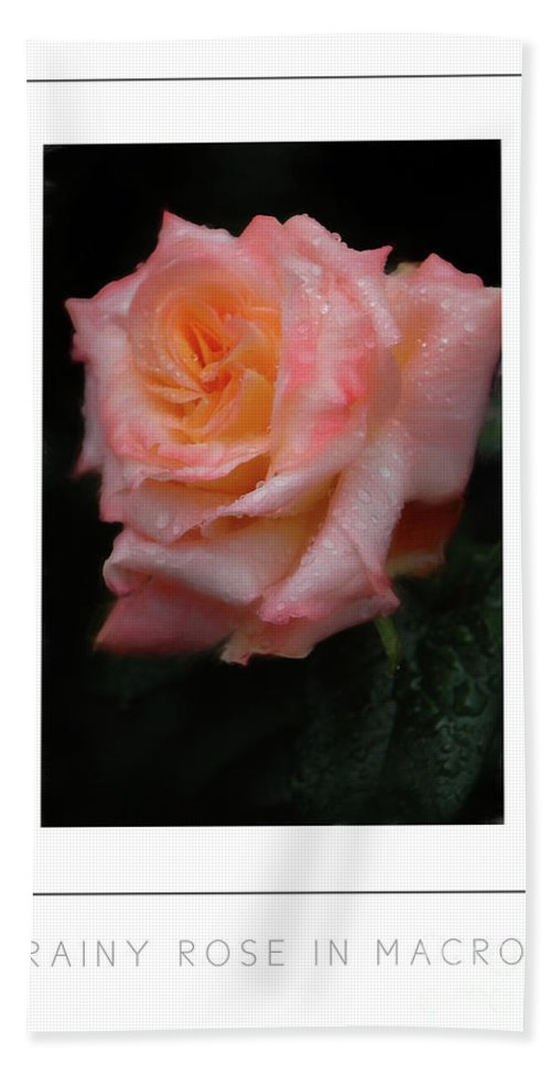 Rose Bath Sheet featuring the photograph Rainy Rose In Macro Poster by Mike Nellums