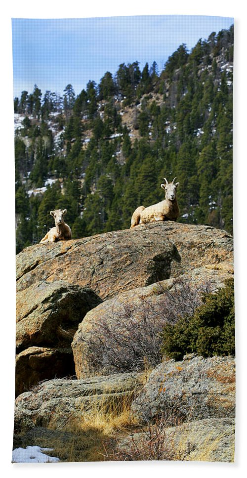 Ram Hand Towel featuring the photograph Ram On The Watch by Marilyn Hunt