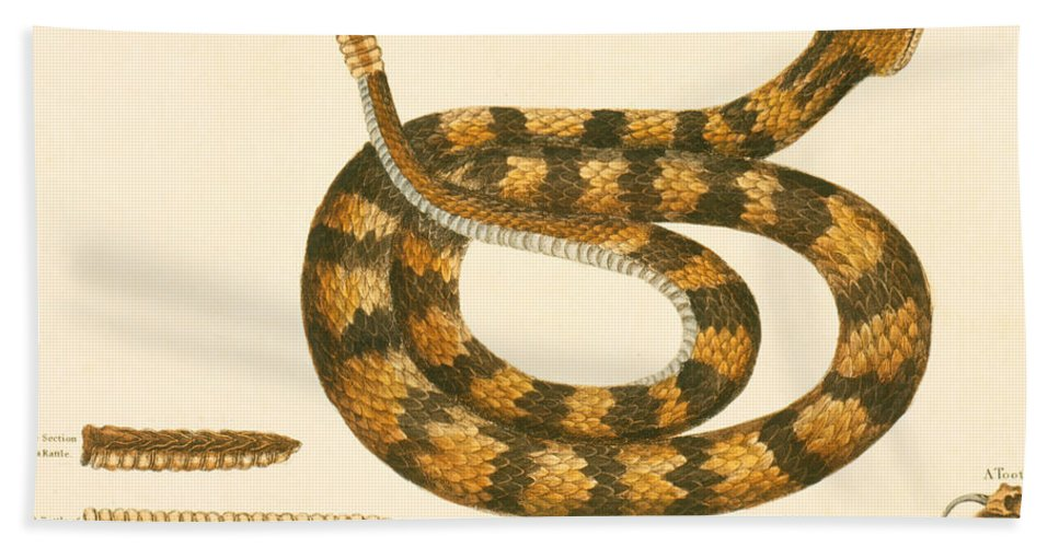 Viper Caudison Snake Hand Towel featuring the drawing Rattlesnake by Mark Catesby
