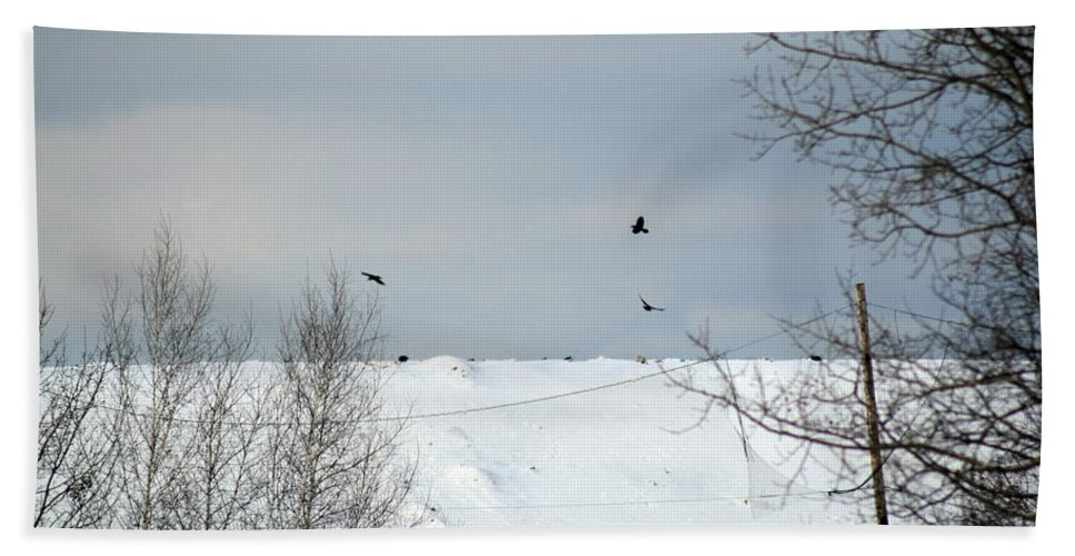 Prowl Hand Towel featuring the photograph Ravens On The Prowl by William Tasker