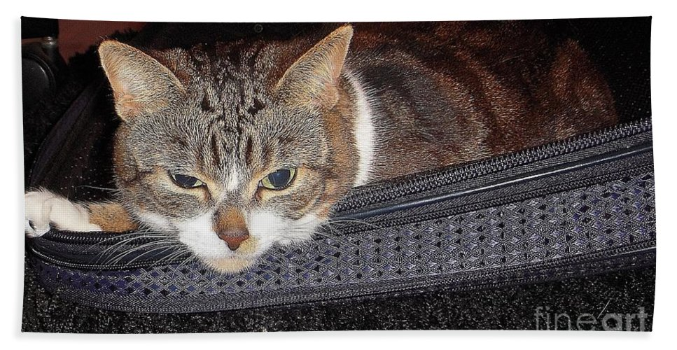 Cat Bath Sheet featuring the photograph Ready For A Trip by Vesna Antic