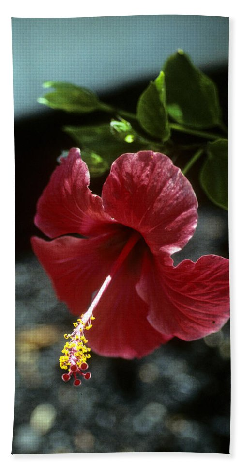 Orchid Hand Towel featuring the photograph Ready For Picking by Gary Wonning