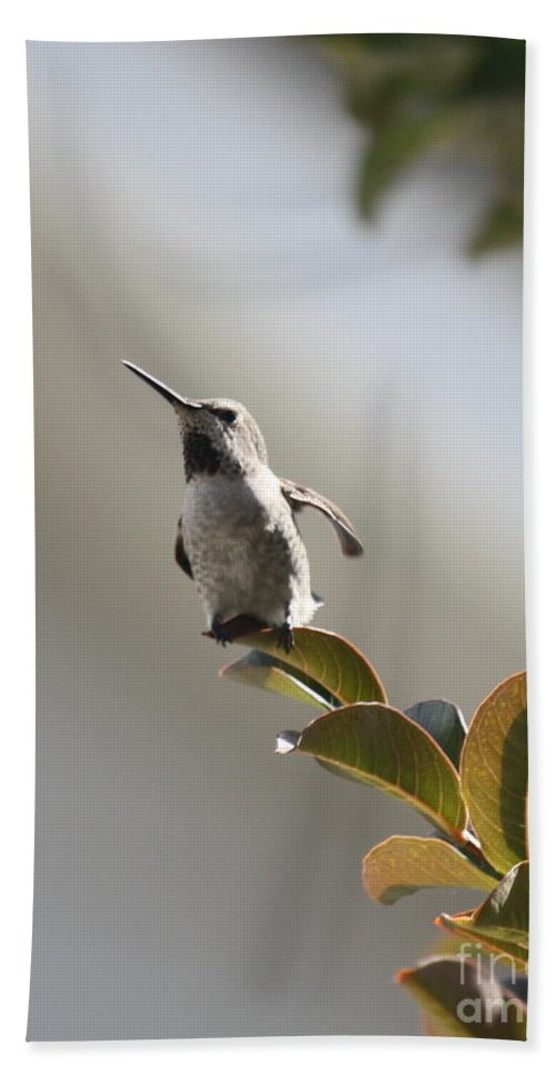 Hummingbird Hand Towel featuring the photograph Ready For Takeoff by Carol Groenen
