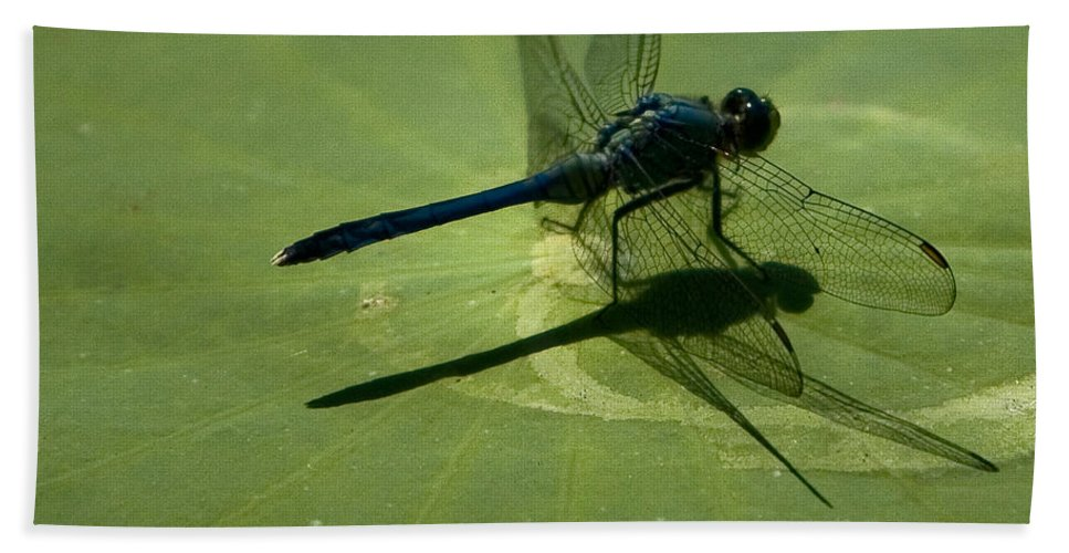 Dragonfly Hand Towel featuring the photograph Ready For Takeoff by Chris Lord