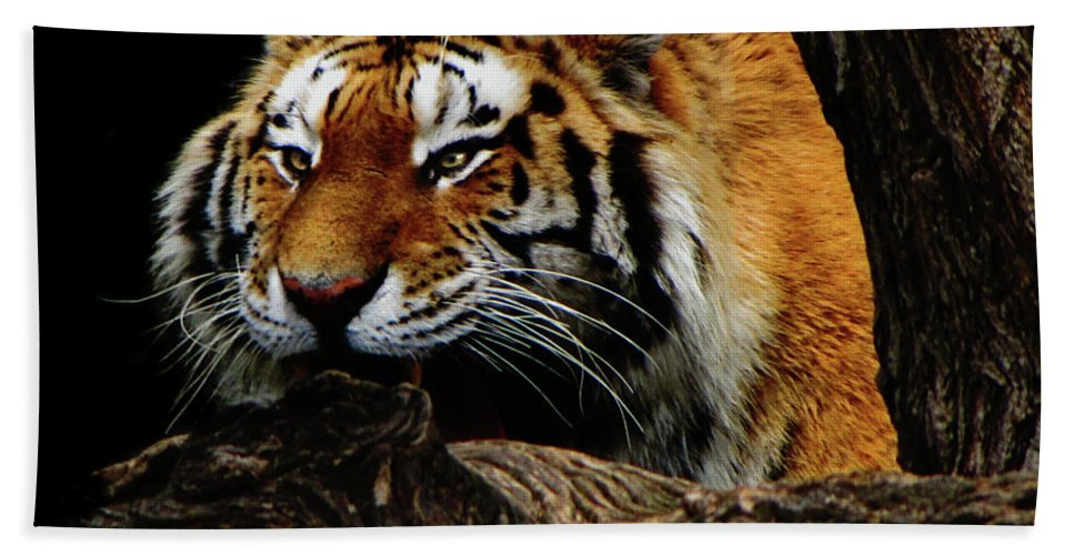 Tiger Hand Towel featuring the photograph Ready Or Not by September Stone