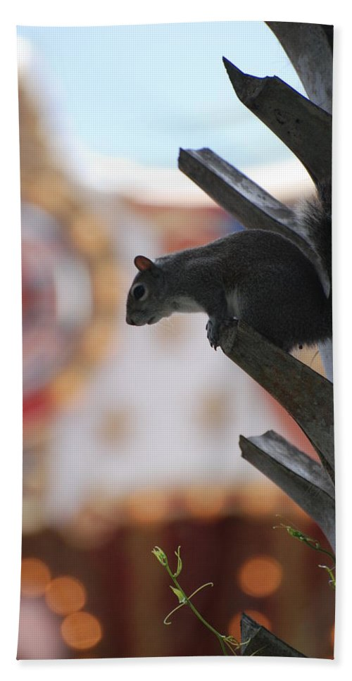 Squirrel Bath Towel featuring the photograph Ready To Jump by Rob Hans