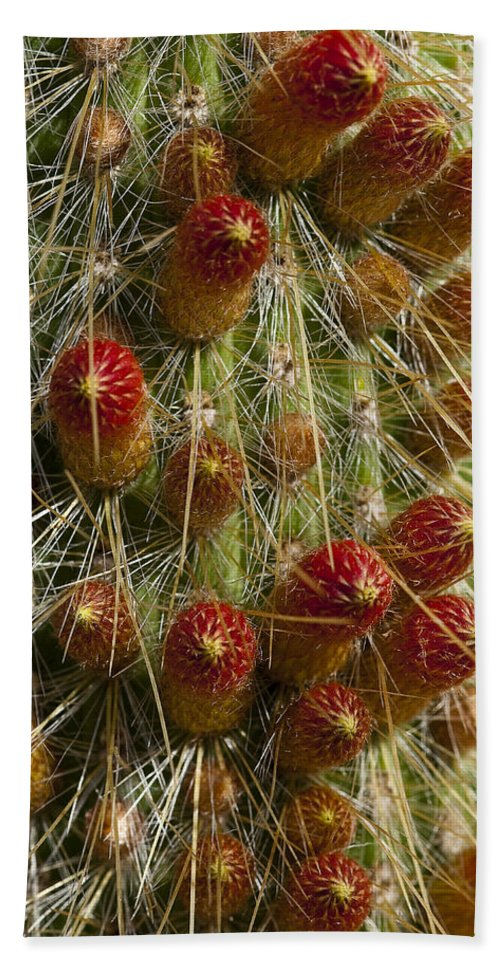 Cactus Hand Towel featuring the photograph Ready To Pop by Kelley King
