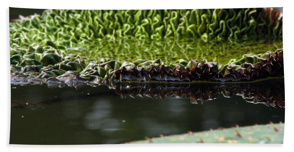 Lillypad Hand Towel featuring the photograph Ready To Spread by Amanda Barcon