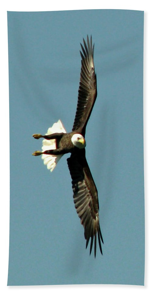 Eagle Bath Sheet featuring the photograph Ready To Strike by Peg Urban