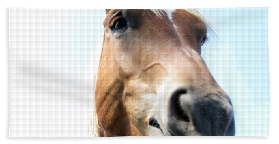 Horse Bath Towel featuring the photograph Really by Amanda Barcon