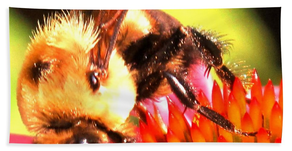 Bee Hand Towel featuring the photograph Really Getting Into It by Ian MacDonald