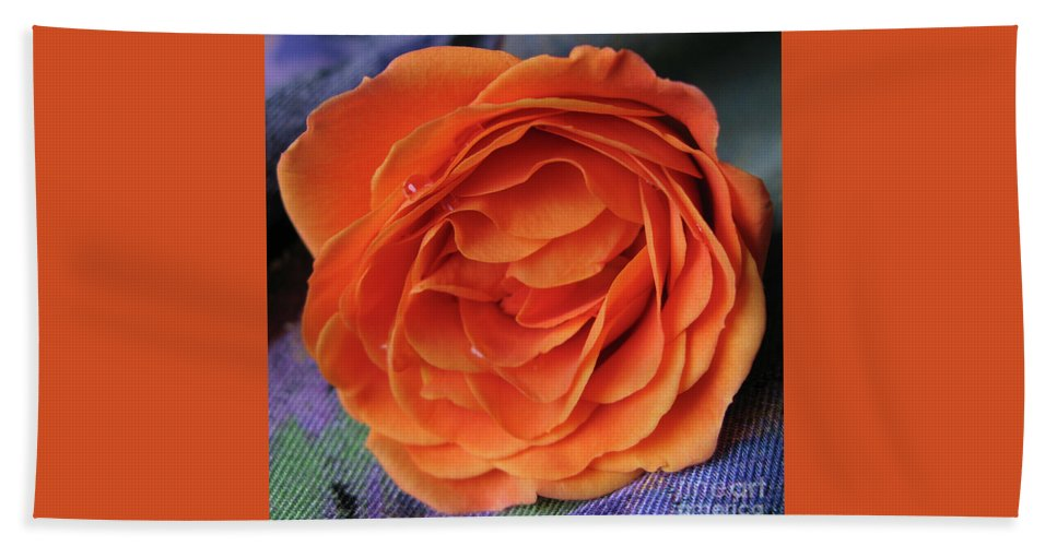 Rose Hand Towel featuring the photograph Really Orange Rose by Ann Horn