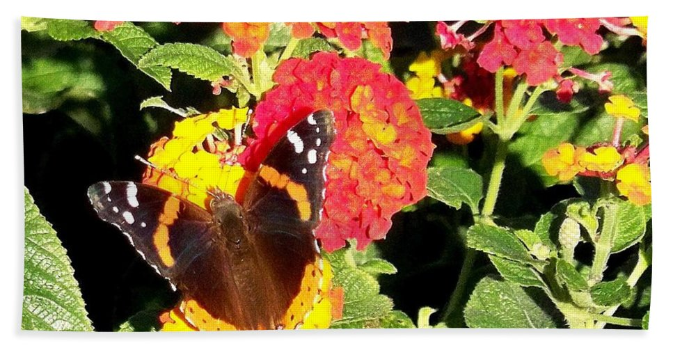 Red Admiral Butterfly Bath Sheet featuring the photograph Red Admiral Butterfly by Adrienne Wilson