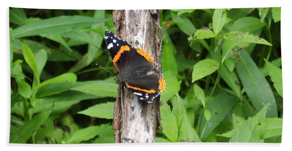 Red Admiral Butterfly Images Red Admiral Butterfly Photograph Prints American Butterflies Entomology Forest Ecosystem Forest Habitat Nature Biodiversity Butterfly Species Orange And Black Butterfly Images Pictures Hand Towel featuring the photograph Red Admiral Butterfly by Joshua Bales