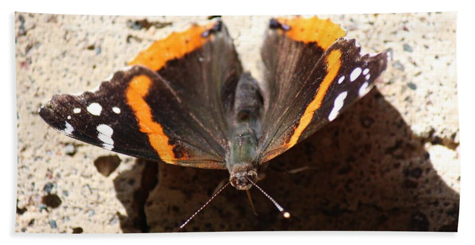 North Bath Sheet featuring the photograph Red Admiral Close by Nicholas Miller