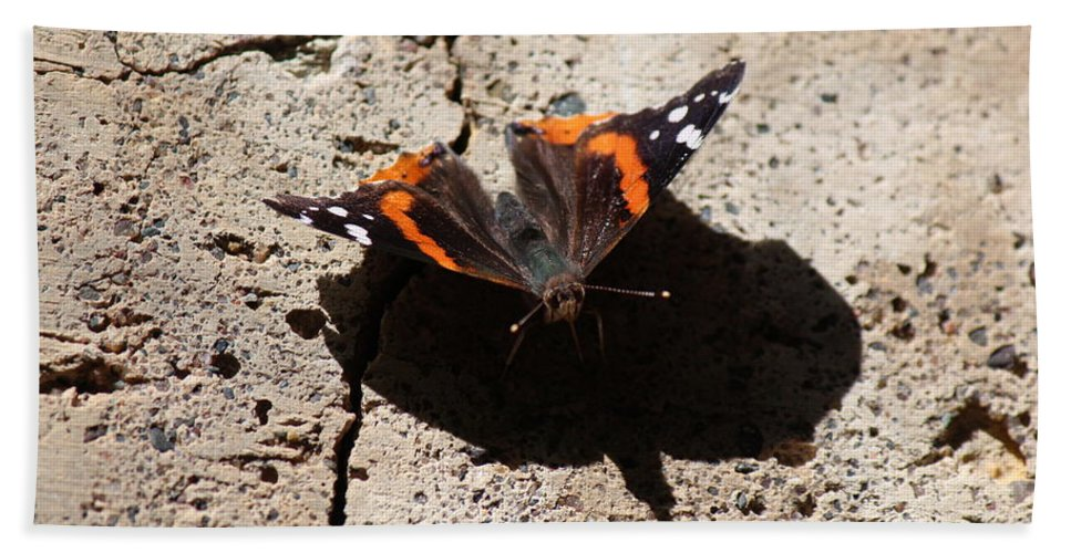 North Bath Sheet featuring the photograph Red Admiral by Nicholas Miller