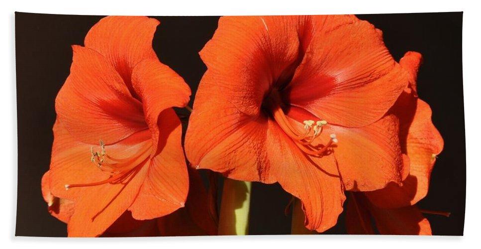 Amaryllis Flower Hand Towel featuring the photograph Red Amaryllis by Georgeta Blanaru