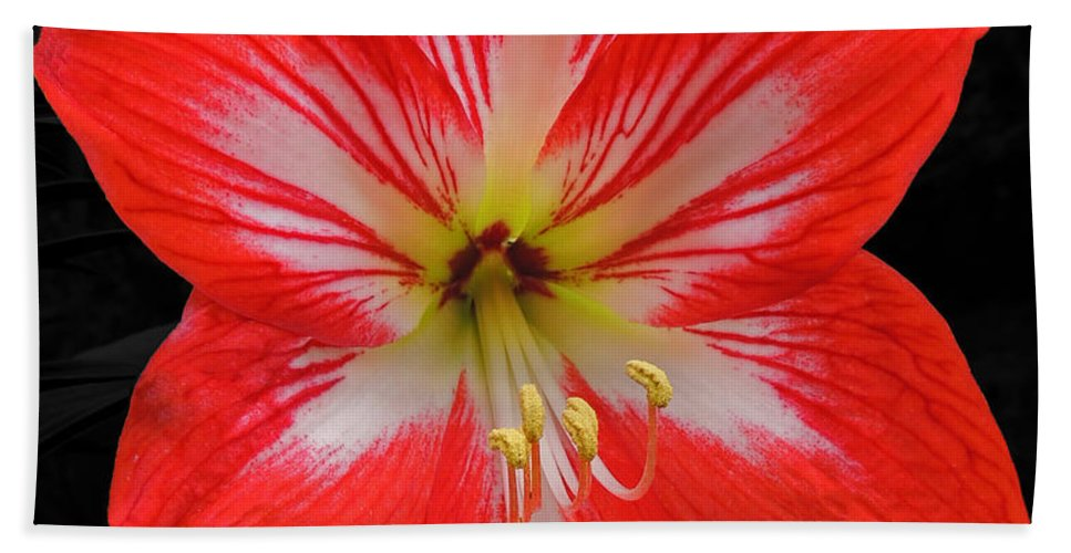 Photographic Print Hand Towel featuring the photograph Red Amaryllis by Marian Bell