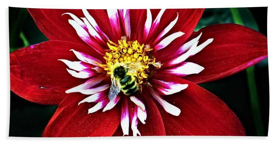 Flower Bath Towel featuring the photograph Red And White Flower With Bee by Anthony Jones