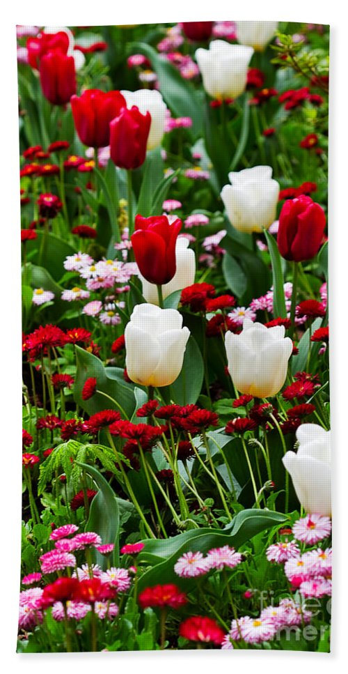 Flower Hand Towel featuring the photograph Red And White Tulips With Red And Pink English Daisies In Spring by Louise Heusinkveld