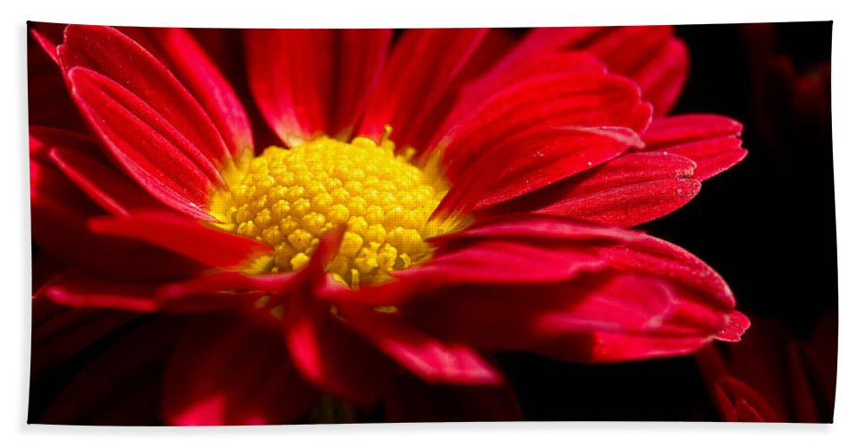 Flower Hand Towel featuring the photograph Red And Yellow by Christopher Holmes