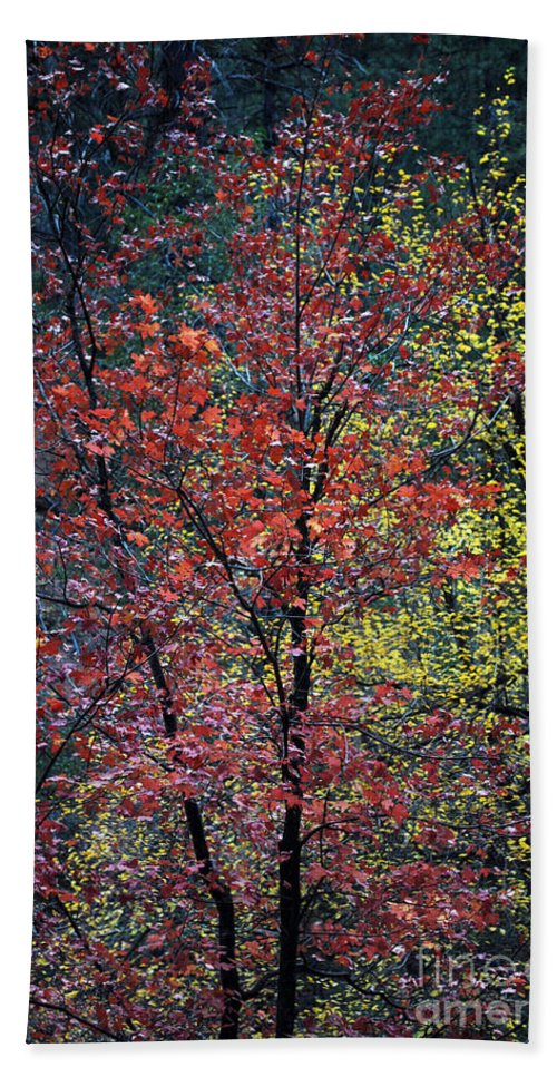 Landscape Hand Towel featuring the photograph Red And Yellow Leaves Abstract Vertical Number 1 by Heather Kirk