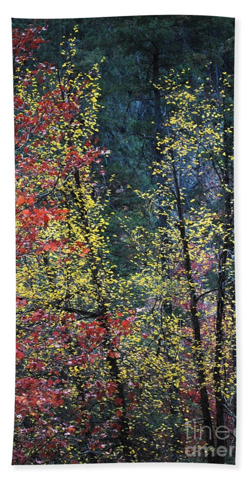 Landscape Hand Towel featuring the photograph Red And Yellow Leaves Abstract Vertical Number 2 by Heather Kirk