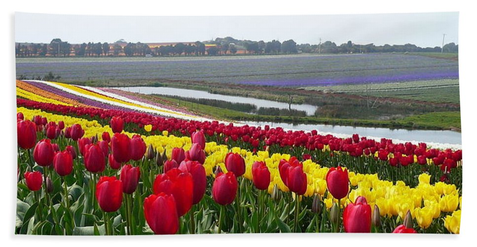 Red And Yellow Tulip Fields Hand Towel featuring the photograph Red And Yellow Tulip Fields by Su Short