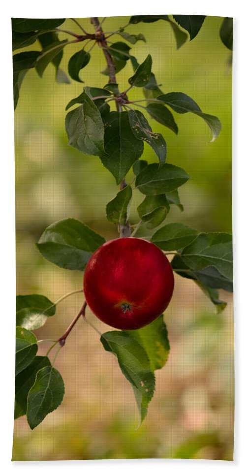 Apple Hand Towel featuring the photograph Red Apple Ready For Picking by Donna Lee