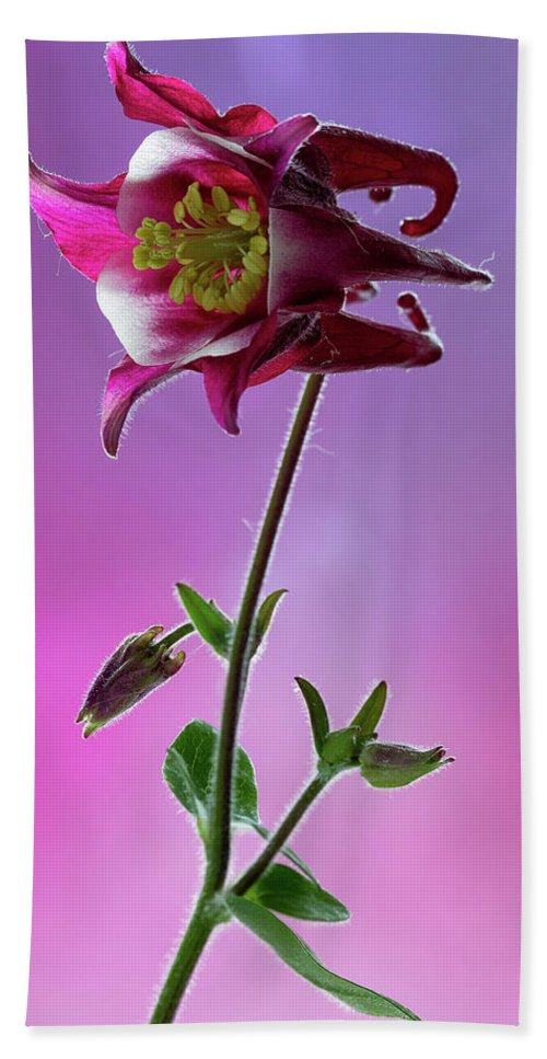 Floral Bath Sheet featuring the photograph Red Aquilegia 2 by Shirley Mitchell