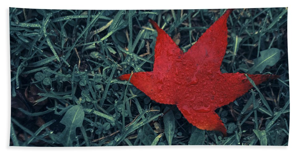 Photograph Hand Towel featuring the photograph Red Autumn by Ignacio Leal Orozco