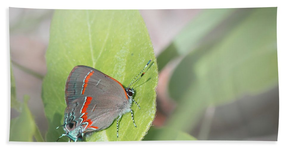 Insect Hand Towel featuring the photograph Red-banded Hairstreak Butterfly by Philip Rispin