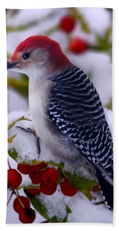 Winter Bath Sheet featuring the photograph Red Bellied Woodpecker by Ron Jones