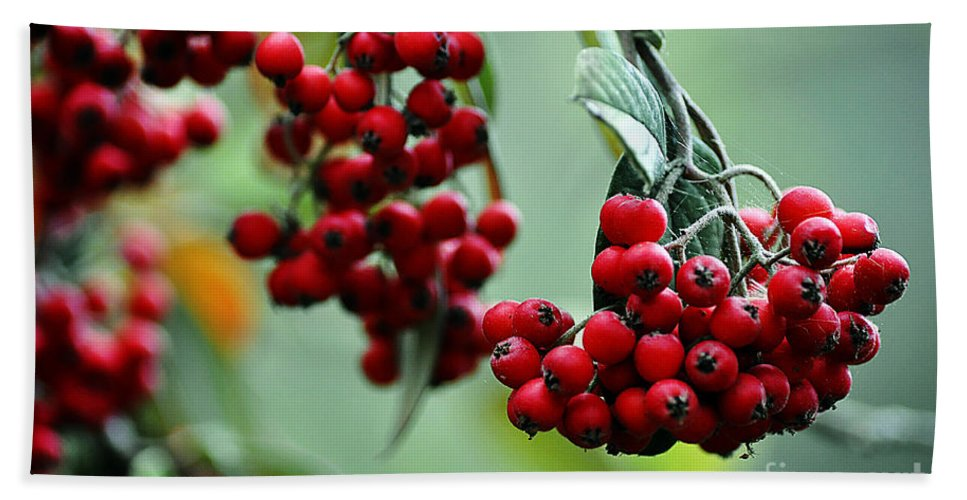 Clay Bath Towel featuring the photograph Red Berries by Clayton Bruster