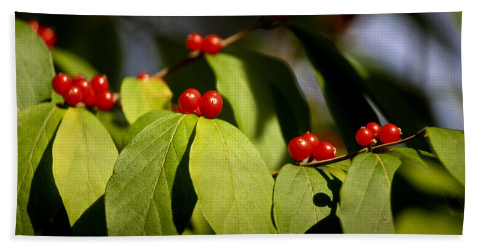 Red Hand Towel featuring the photograph Red Berries by Teresa Mucha