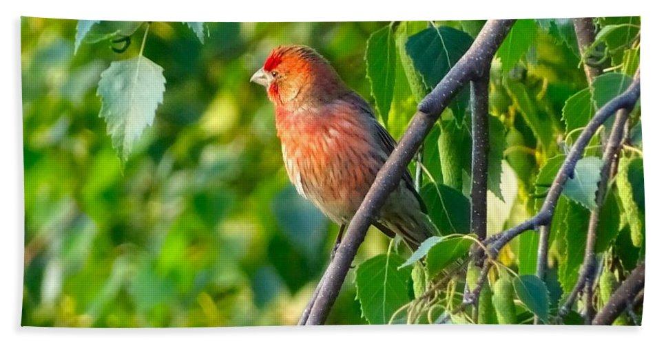 Bird Bath Sheet featuring the photograph Red Bird by Lilia D
