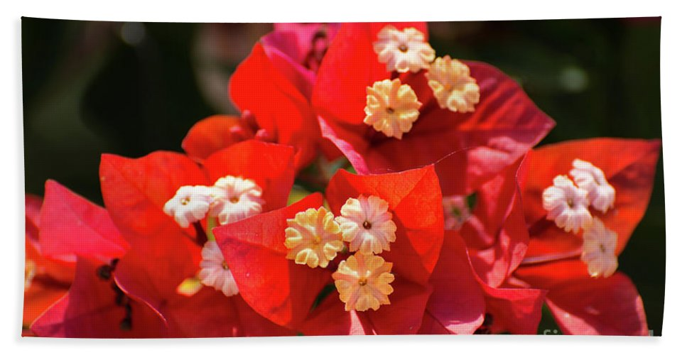 Bougainvillea Bath Towel featuring the photograph Red Bougainvillea by Zina Stromberg