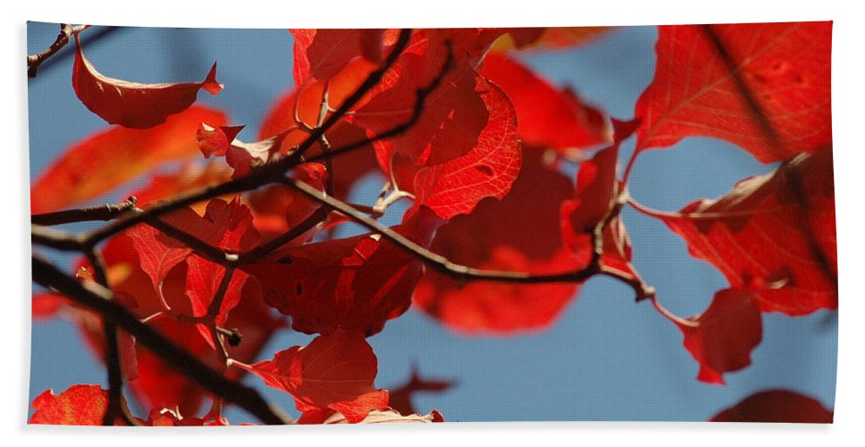 Falls Leaves Hand Towel featuring the photograph Red Brown And Blue by Trish Hale