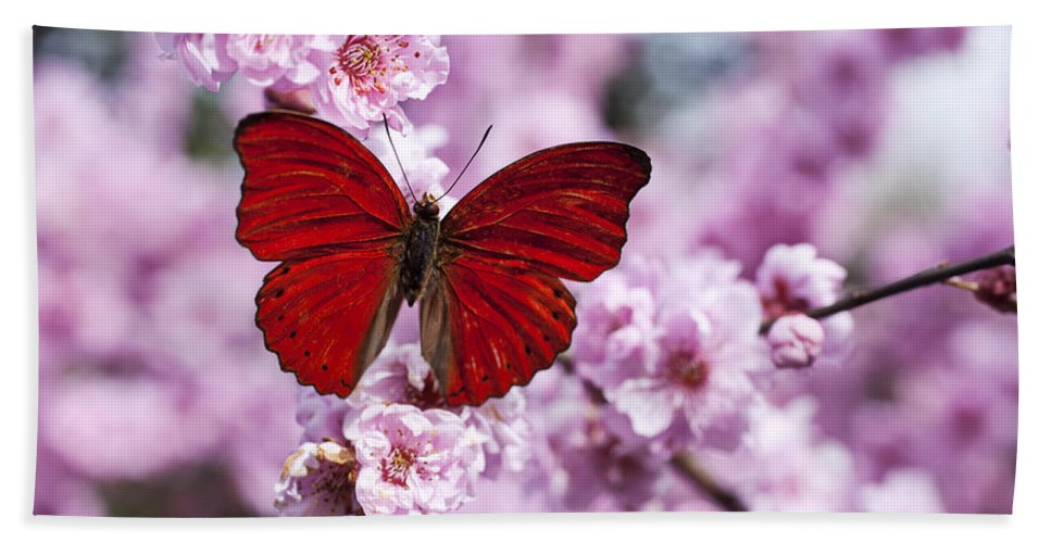 Red Bath Towel featuring the photograph Red butterfly on plum blossom branch by Garry Gay