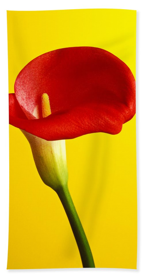 Red Yellow Flower Flowers Calla Lily Lilies Stem Yellow Graphic Design Bright Color Colors Colour Colours Colorful Distinctive Lilum Lilys Arum Bulb Close Up Detail Details Beauty Nature Beautiful Blossom Delicate Fragile Growing Vertical Plant Plants Concepts Decoration Bloom Blooming Botanical Floral Horticulture Floriculture Blossoming Flowering Petal Serenity Stamen Majestic Grow Unusual Bath Towel featuring the photograph Red Calla Lilly by Garry Gay