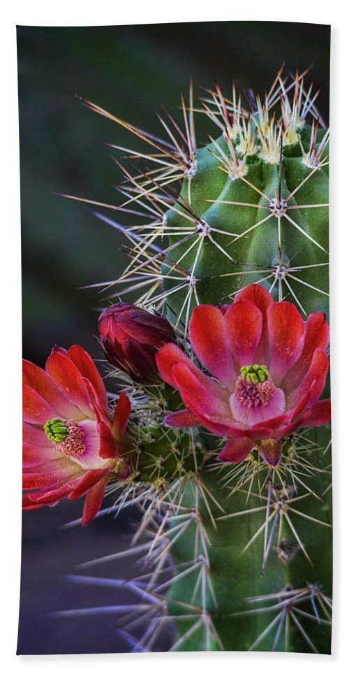Claret Cup Cactus Bath Towel featuring the photograph Red Claret Cup Cactus by Saija Lehtonen
