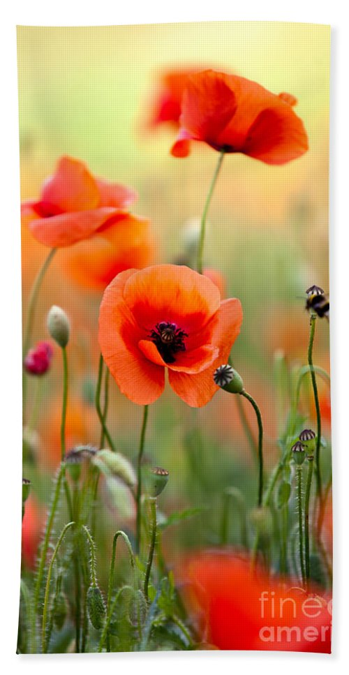Poppy Bath Towel featuring the photograph Red Corn Poppy Flowers 06 by Nailia Schwarz