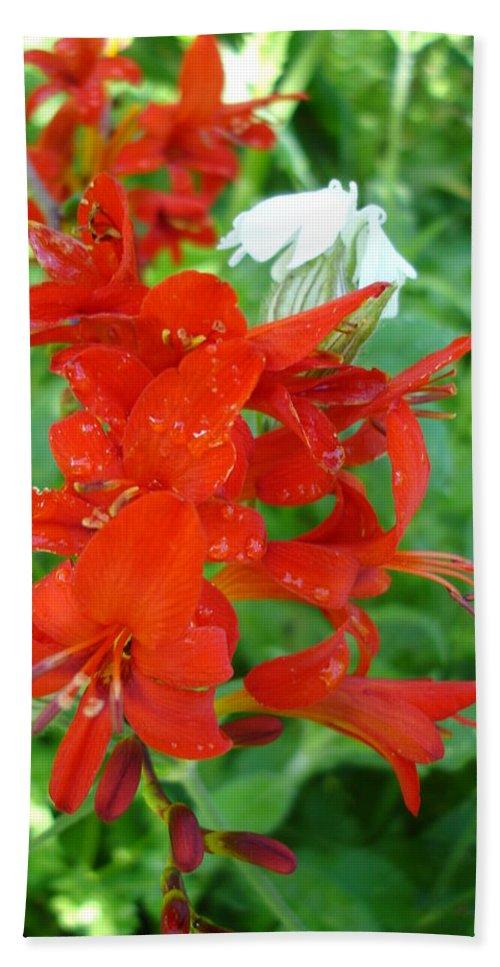 Flora Bath Sheet featuring the photograph Red Crocosmia Lucifer by Susan Baker