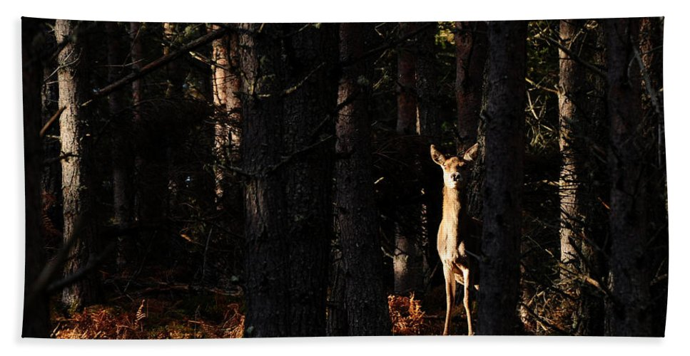 Red Deer Hind Bath Sheet featuring the photograph Red Deer In The Woods by Gavin Macrae